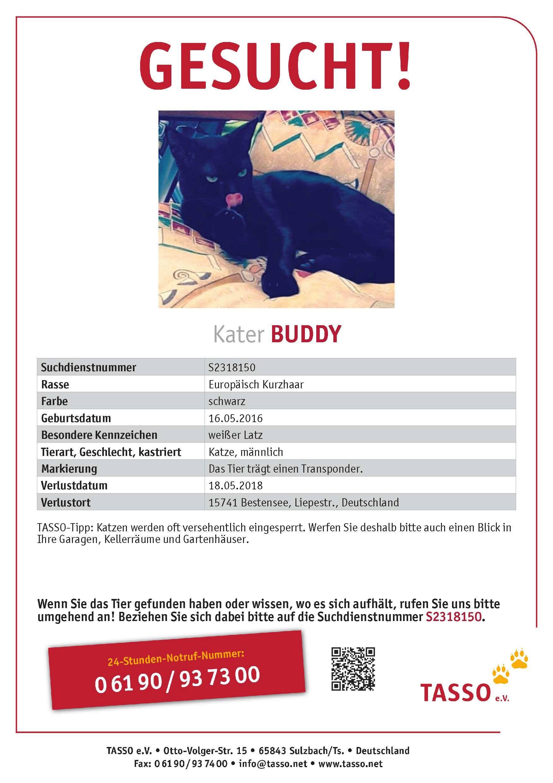 Ungewöhnlich Verlorene Katze Poster Vorlage Fotos - Beispiel ...